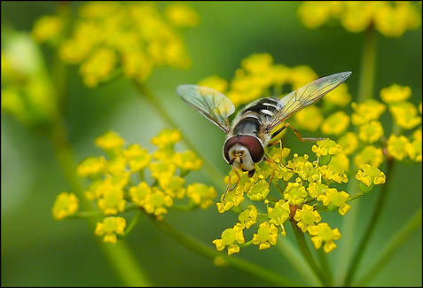 insect-AS347.jpg