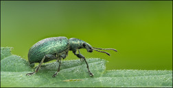 insect-AS216.jpg
