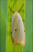insect-AS217.jpg