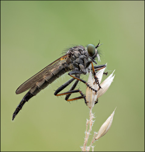 insect-AS254.jpg