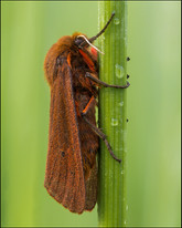 insect-AS162.jpg