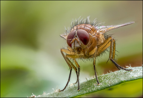 insect-AS228.jpg