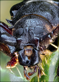 insect-AS273.jpg
