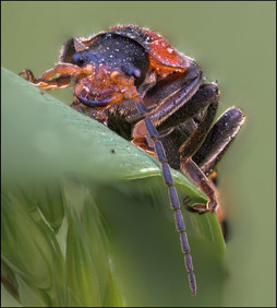 insect-AS189.jpg