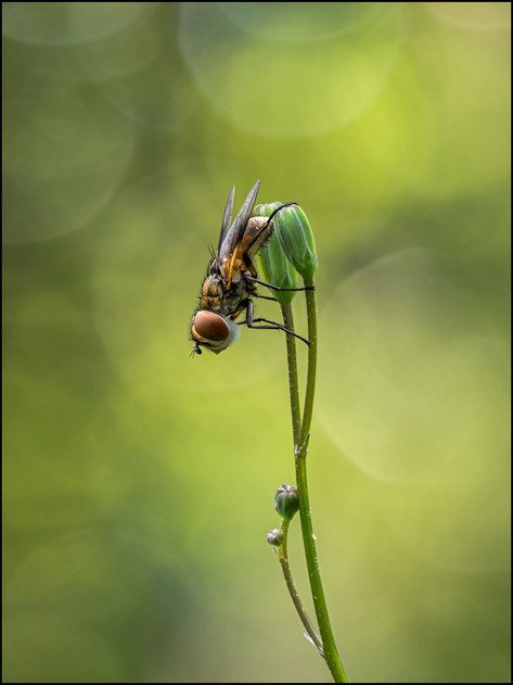 insect-AS243.jpg