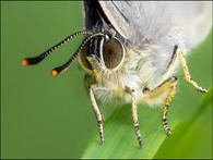 insect-AS241.jpg