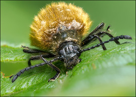 insect-AS232.jpg