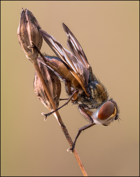 insect-AS324.jpg