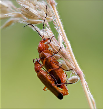 insect-AS244.jpg