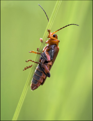 insect-AS192.jpg