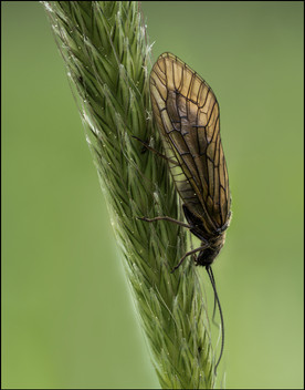 insect-AS129.jpg