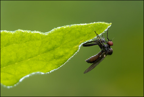 insect-AS335.jpg