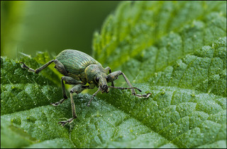 insect-AS144.jpg