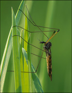 insect-AS93.jpg