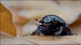insect-AS361-18.jpg