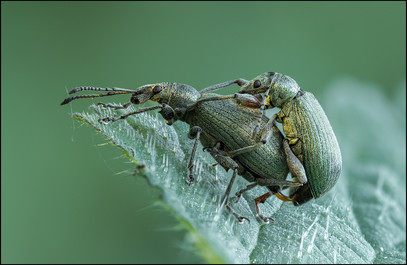 insect-AS125.jpg