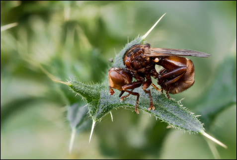 insect-AS257.jpg