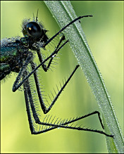 insect-AS149.jpg