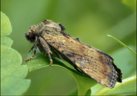 insect-AS258.jpg