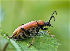 insect-AS260.jpg