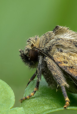 insect-AS292.jpg