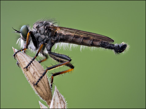 insect-AS230.jpg
