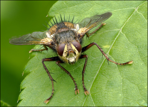 insect-AS336.jpg