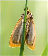 insect-AS176.jpg