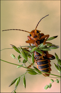 insect-AS227.jpg