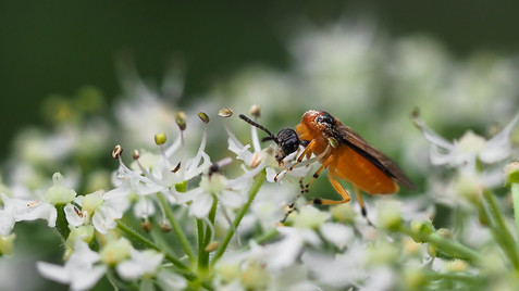 insect-AS345.jpg