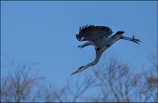 bird-AS26.jpg