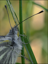 insect-AS61.jpg