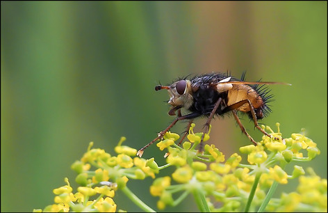 insect-AS346.jpg