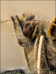 insect-AS340.jpg