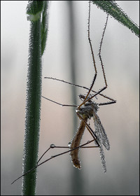 insect-AS155.jpg