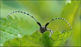 insect-AS186.jpg
