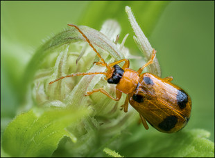 insect-AS265.jpg