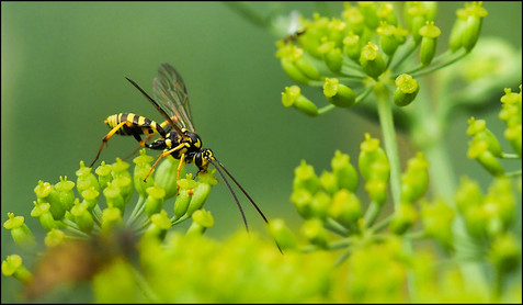 insect-AS348.jpg