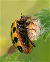 insect-AS128.jpg