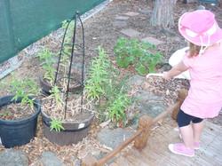 Watering the herbs