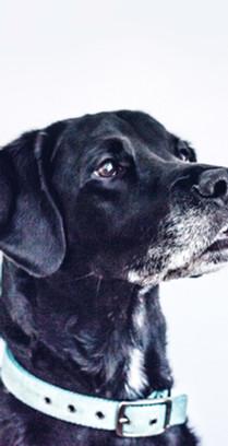 Black Dog