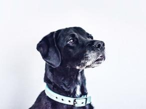 #EDUBLOG Consigli ed esercizi per il vostro cane
