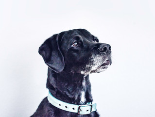 Health checks for Senior Pets