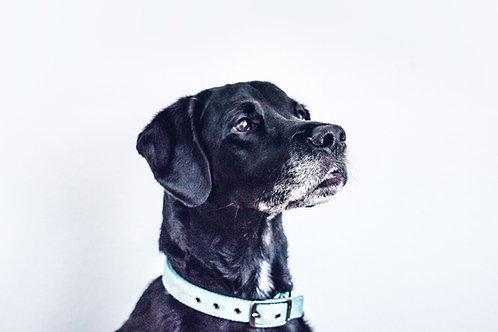 Customize Your Own dog bandana
