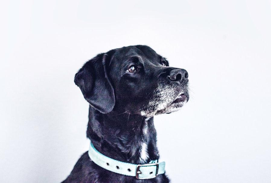 Futter für Ältere Hunde