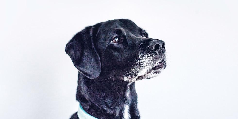 Behavior Wellness for Your Senior Dog
