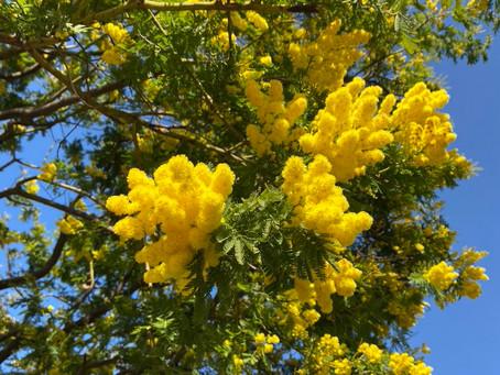 L'idée séjour du mois : la Route du Mimosa