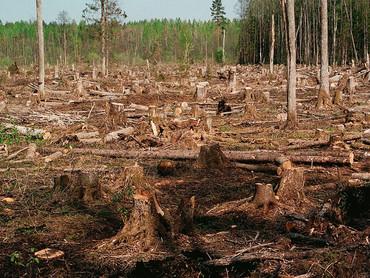 Инвентаризация лесов раз в десять лет. А когда вернётся инвентаризация жилья?