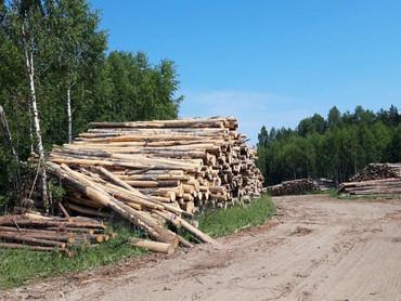 В Подмосковье продолжается нещадная вырубка лесов