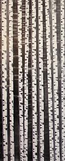 """""""Oregon Birch No. 1"""" by David Castle"""